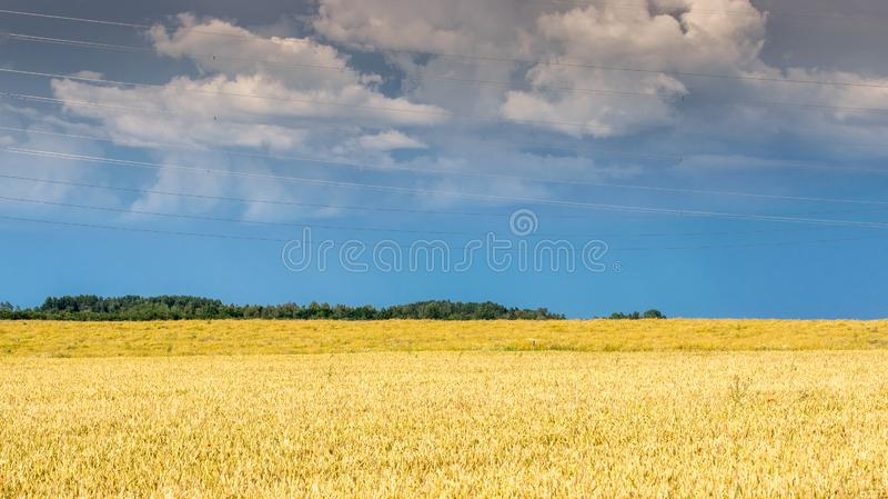 Bewolkte blauwe hemel over gouden gebied na regen royalty-vrije stock foto's