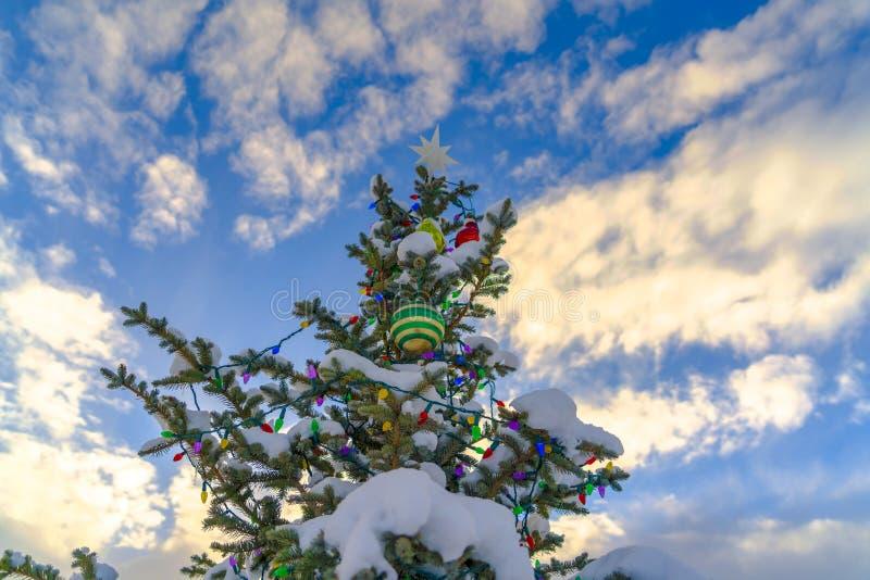 Bewolkte blauwe hemel over sneeuw behandelde Kerstboom royalty-vrije stock afbeeldingen