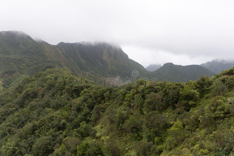 Bewolkte dag in het regenwoud stock foto's