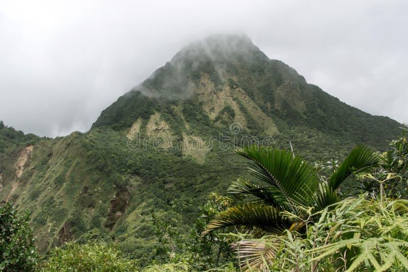 Bewolkte dag in het regenwoud stock fotografie