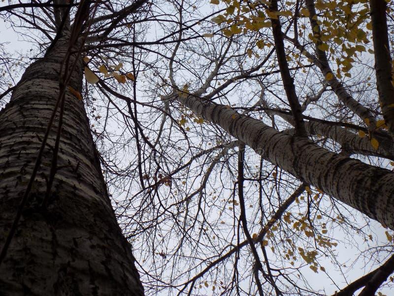 Bewolkte de herfst bosbomen stock fotografie
