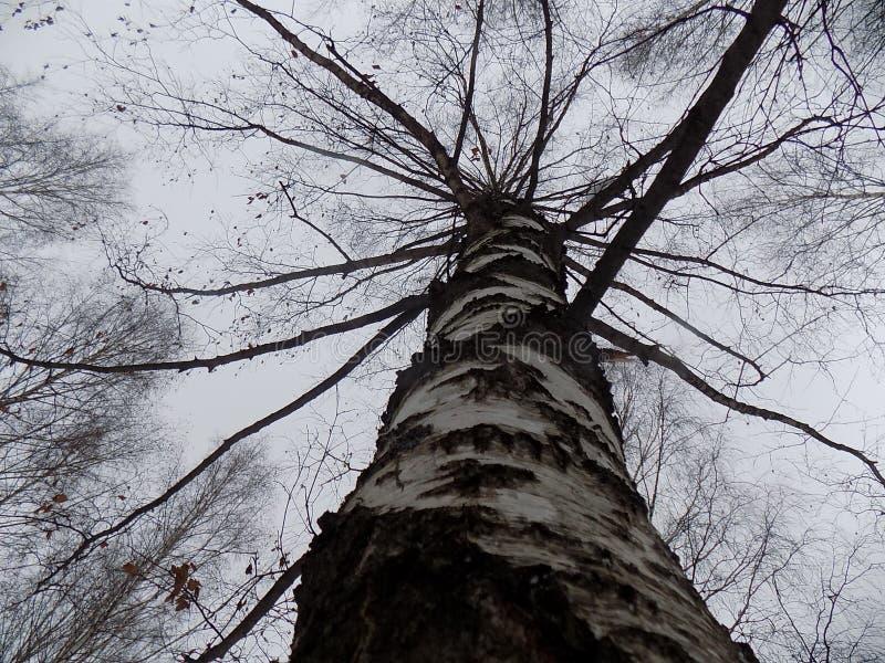 Bewolkte de herfst bosbomen stock afbeeldingen