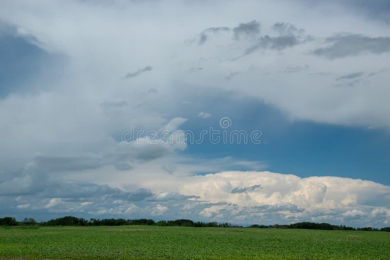 Bewolkte hemel boven canolagebieden, Saskatchewan, Canada stock afbeelding