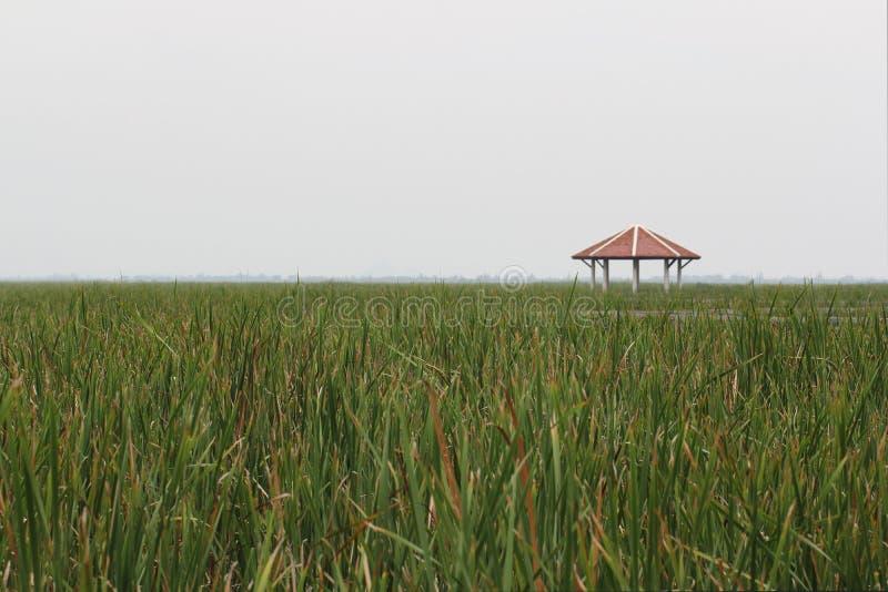 Bewolkte Hemel en Schuilplaats onder de groene achtergronden van het aardgras in vroeg van zomer, vreedzame situatie, reisbestemm royalty-vrije stock foto