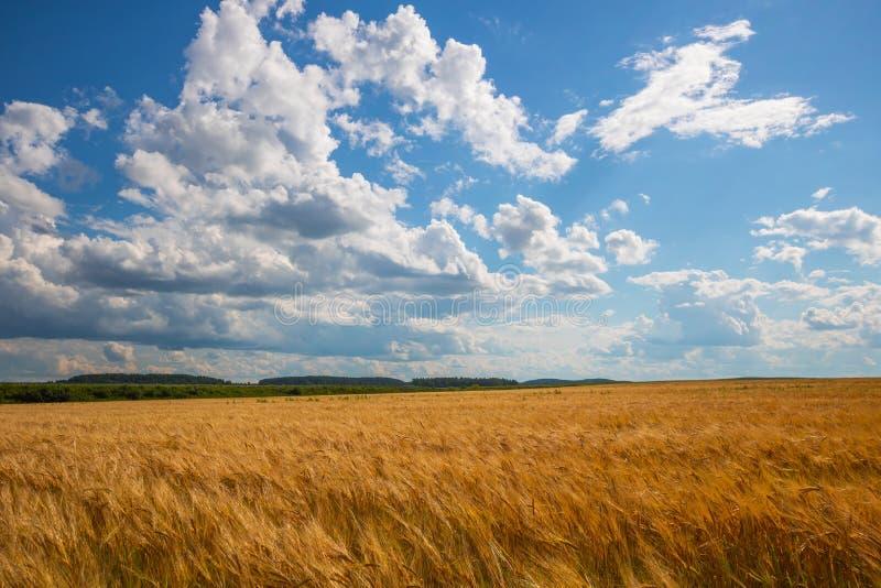 Bewolkte hemel over gouden gebied regen voordien royalty-vrije stock foto