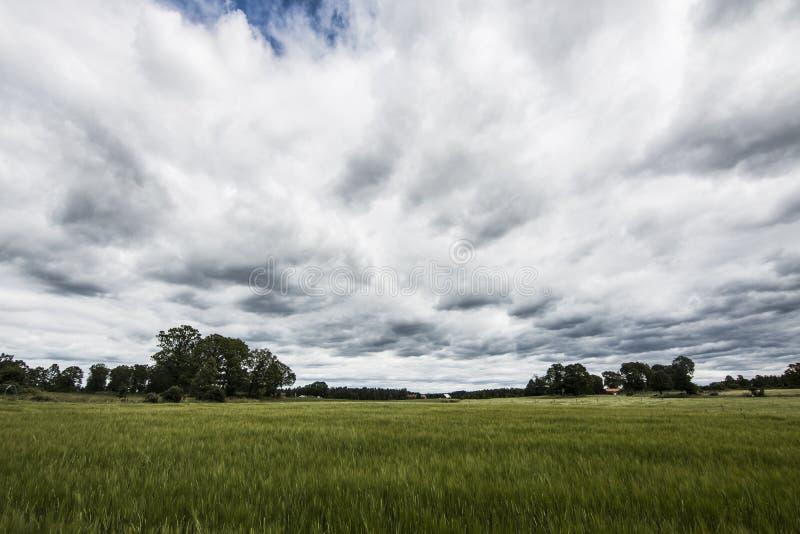 Bewolkte hemel over groen gebied stock afbeeldingen