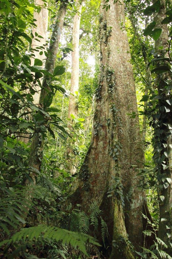 Bewolkte regenwoud hoge wildernis Henri Pittier National Park Venezuela maar royalty-vrije stock afbeeldingen