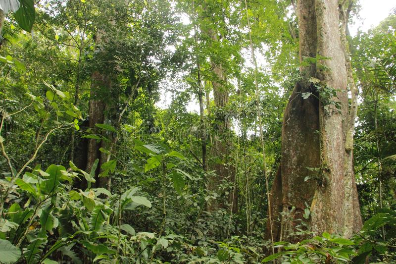 Bewolkte regenwoud hoge wildernis Henri Pittier National Park Venezuela maar stock foto's