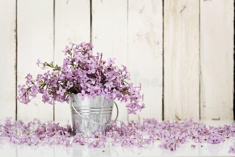 bez kwiatów zdjęcia royalty free
