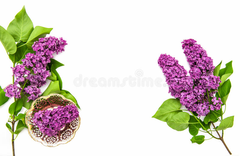 Bez kwitnie białego tło Świezi wiosna kwiaty obrazy royalty free
