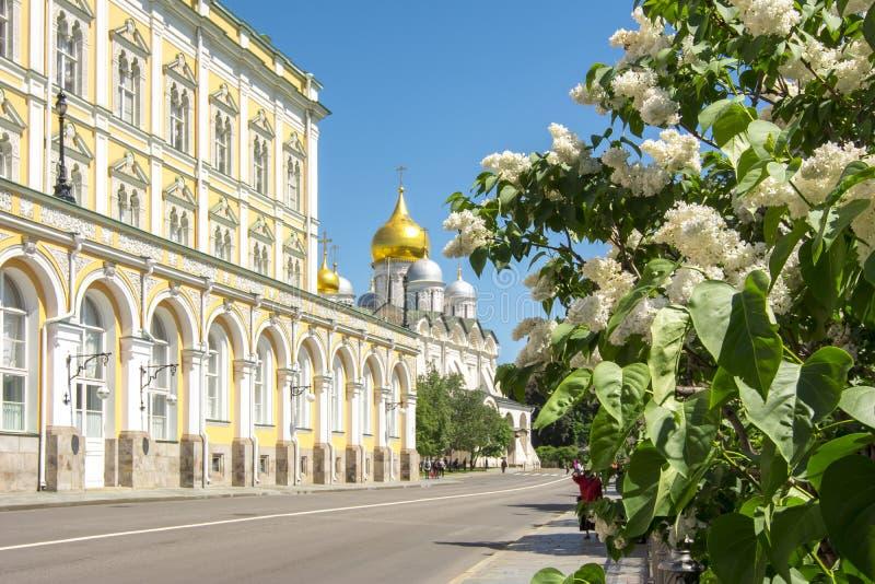 Bez kwitnie kwitnienie w Moskwa Kremlin, Rosja obraz royalty free