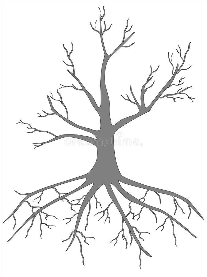 Bez liści orzecha włoskiego drzewo na białym tle ilustracja wektor