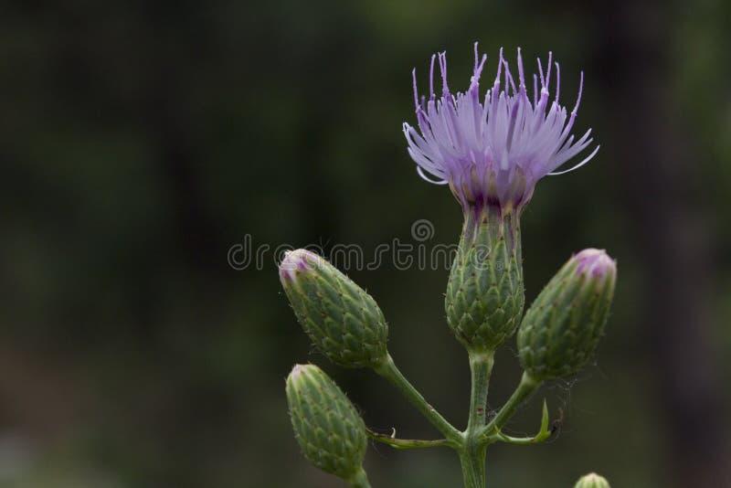 Bez nazwy kwiat zdjęcia royalty free