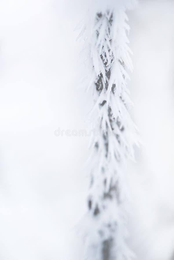 Bez skupienia, gałąź w dużych iglicach zmarzliny Abstrakcyjne naturalne naturalne tło zimowe obrazy stock