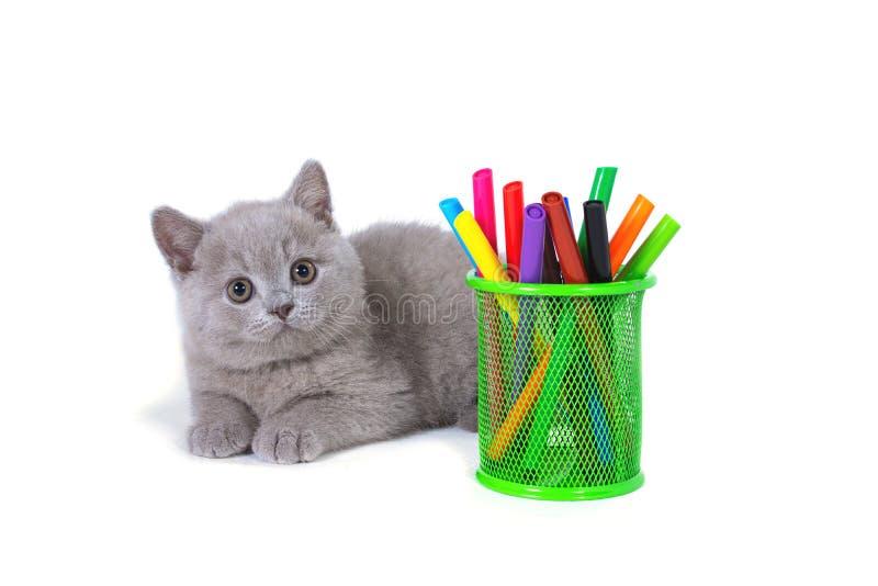 Bezaubern, malvenfarbene britische Kätzchenlügen, Glas mit Markierungen, auf einem weißen Hintergrund Hallo Schule lizenzfreies stockfoto