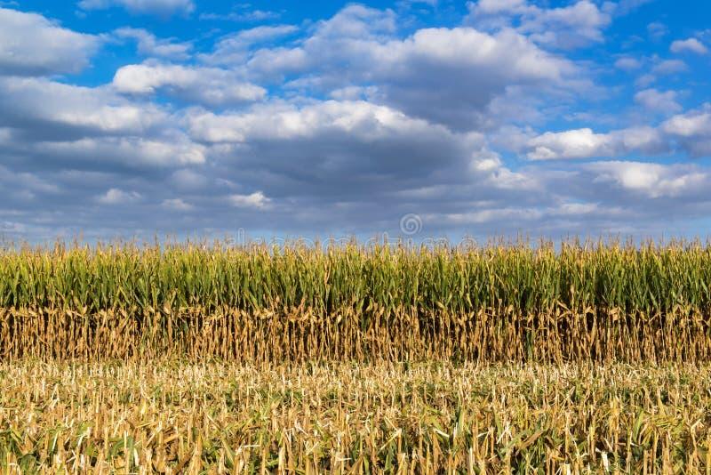 Bezaubernde Landschaft auf gedroschenem Maisfeld und bewölktem Himmel stockfotografie