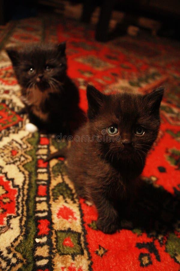 bezaubernde neugierige Kätzchen lizenzfreie stockbilder