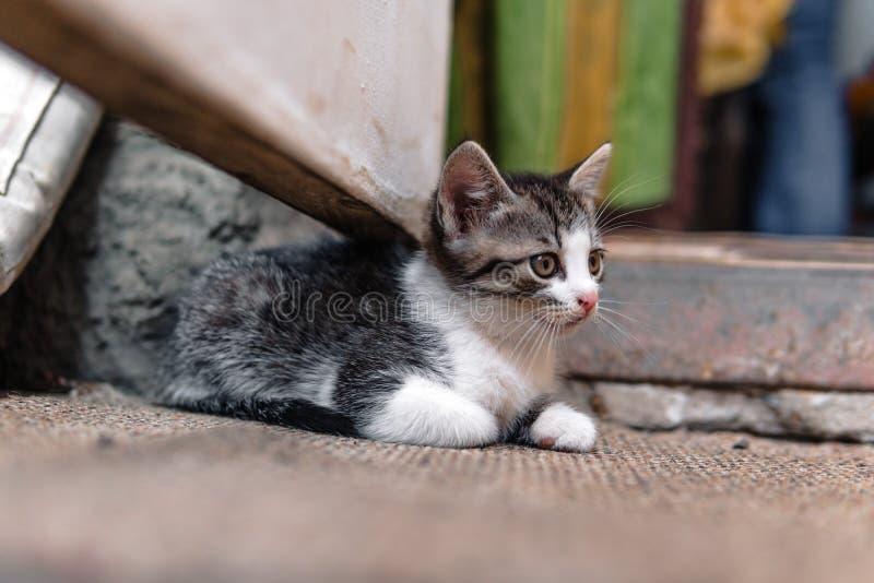 Bezdomna figlarka, samotna, kot, koty ulica potrzeba przyjaciele obrazy royalty free