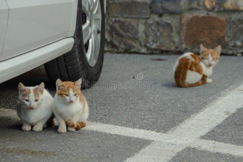 Bezdomne figlarki w parking beli zdjęcia royalty free