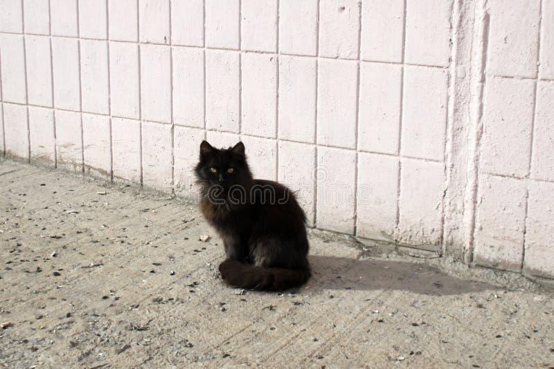 bezdomni koty obrazy stock