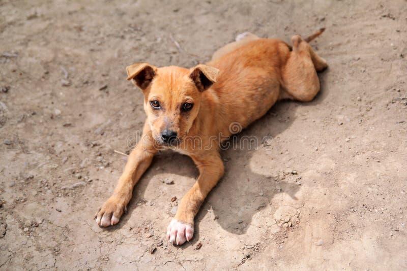 Bezdomny błąkał się lewy żółty szczeniak na poboczu, osamotnionym smutnym przybłąkanym psie i spojrzeniu naprzód ulicznym, Biedny zdjęcie royalty free