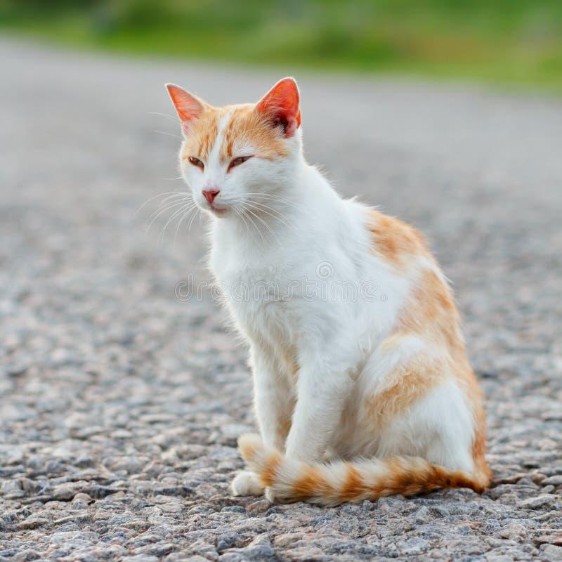 Bezdomny czerwony kota obsiadanie na ciepłej asfaltowej drodze Przybłąkany kota scr obraz royalty free