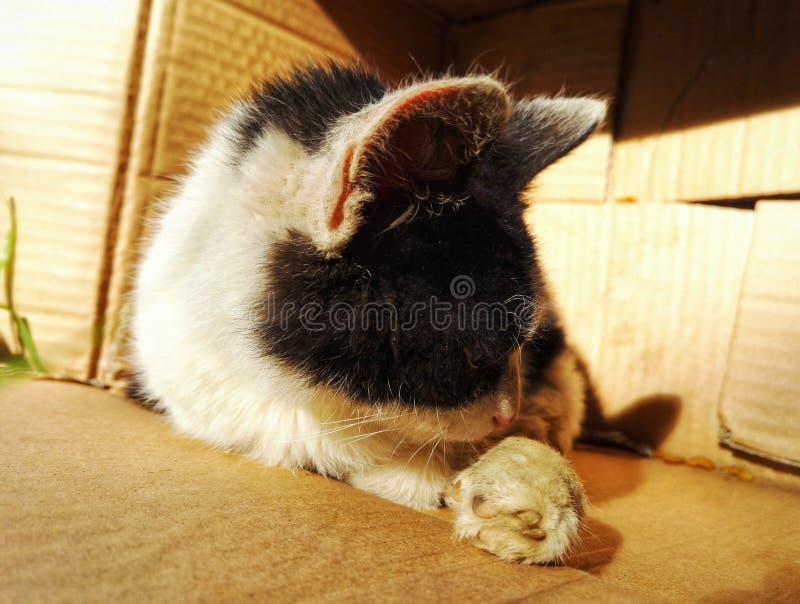 Bezdomny i skaleczenie przybłąkany kot fotografia stock