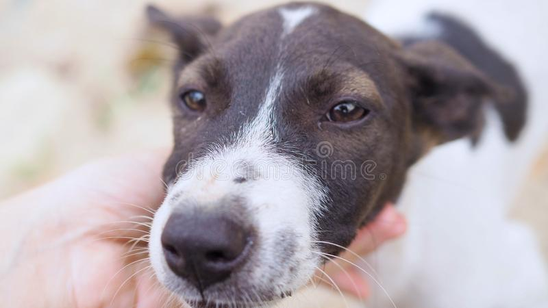 Bezdomny jest prześladowanym, Selekcyjna ostrość patrzeje kamerę potomstwo pies zdjęcie royalty free
