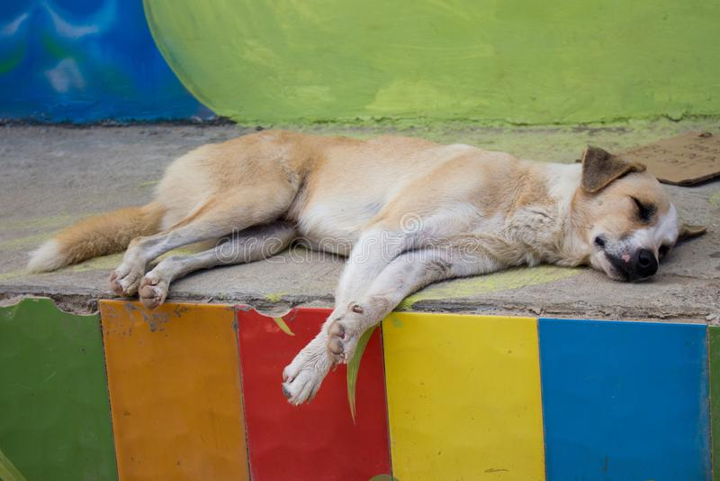 Bezdomny jest prze?ladowanym na ulicie Sypialny pies na grodzkich ulicach Smutny zmęczony zwierzę domowe na letnim dniu zdjęcie stock