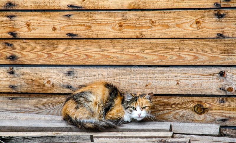 Bezdomny kot który opuszczali bez właścicieli fotografia stock