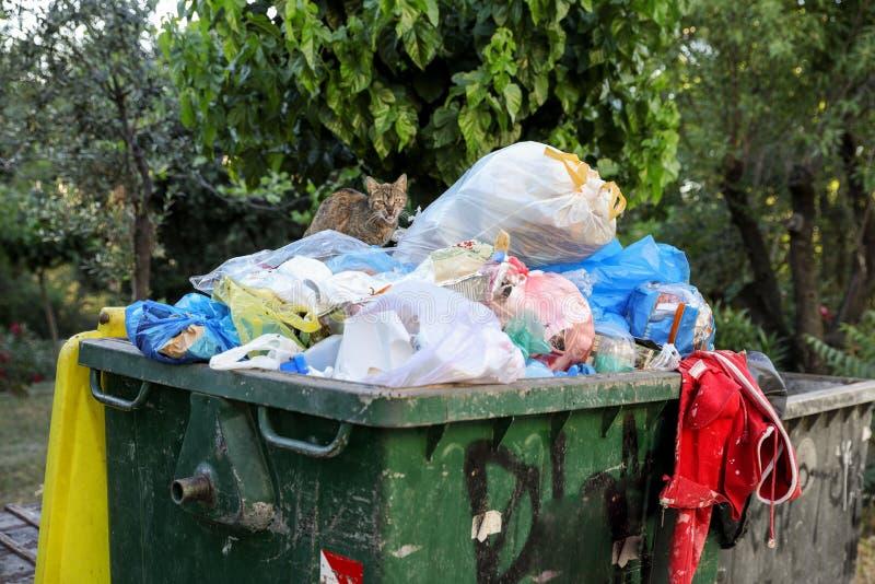 Bezdomny kot patrzeje dla resztek jedzenie w pojemnik na śmiecie obrazy royalty free