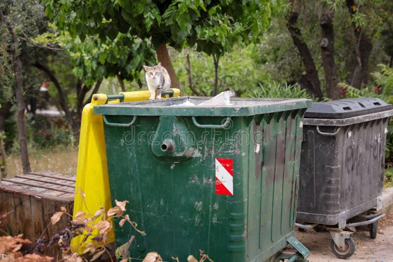 Bezdomny kot patrzeje dla resztek jedzenie w pojemnik na śmiecie obraz stock