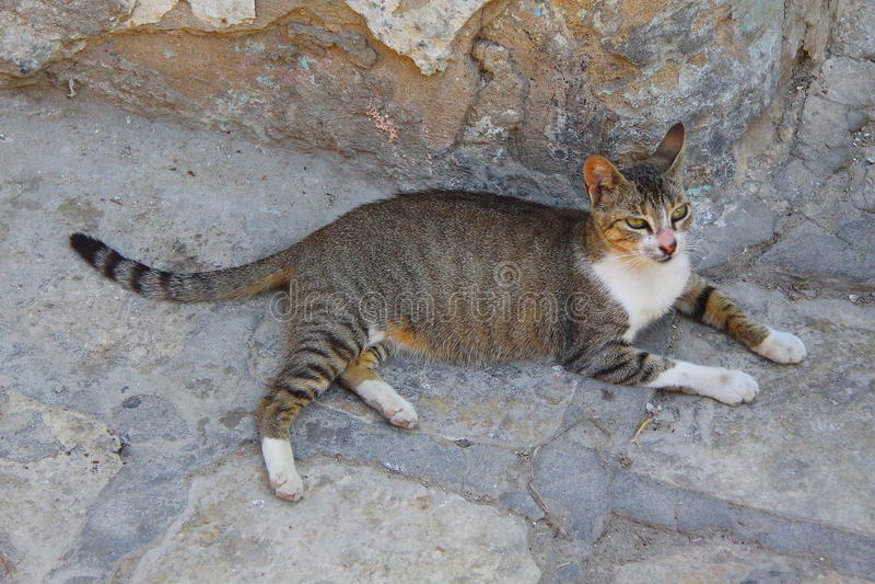Bezdomny kot w mieście Sousse zdjęcia royalty free
