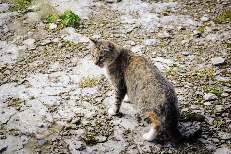 Bezdomny kot w ogródzie, outdoors zdjęcia stock