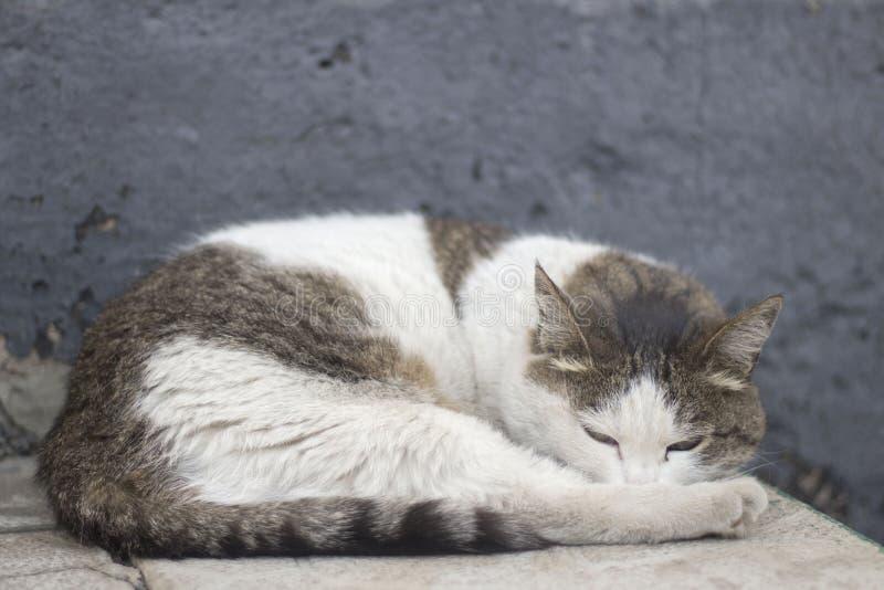 Bezdomny kota dosypianie na ulicie zdjęcia stock