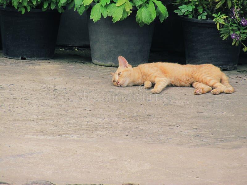 Bezdomny kota lying on the beach na chodniczka bruku z garnek roślinami w plecy obraz stock