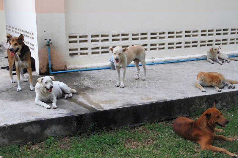 bezdomny pies zdjęcia royalty free