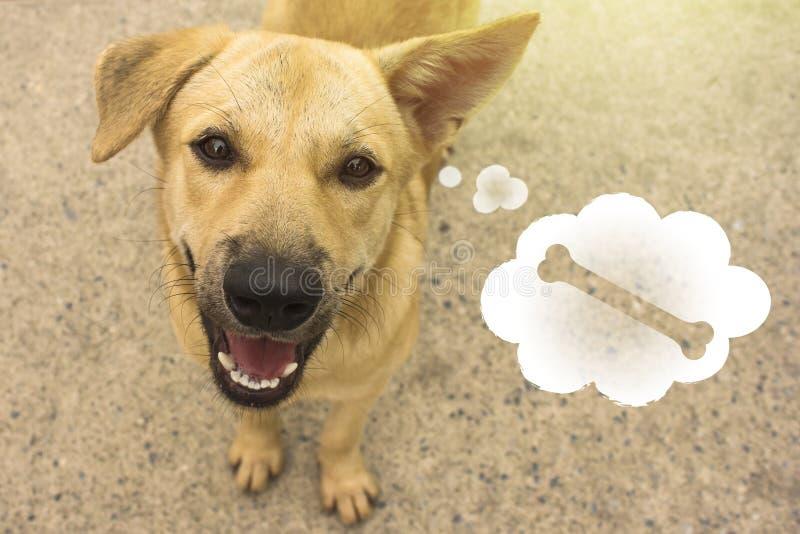 Bezdomny pies z myślami o jedzeniu, o kości obrazy stock