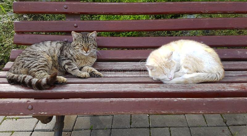 Bezdomny przybłąkani koty siedzą na brown ławce w parku, bielu i tabby kolorach, zdjęcie stock