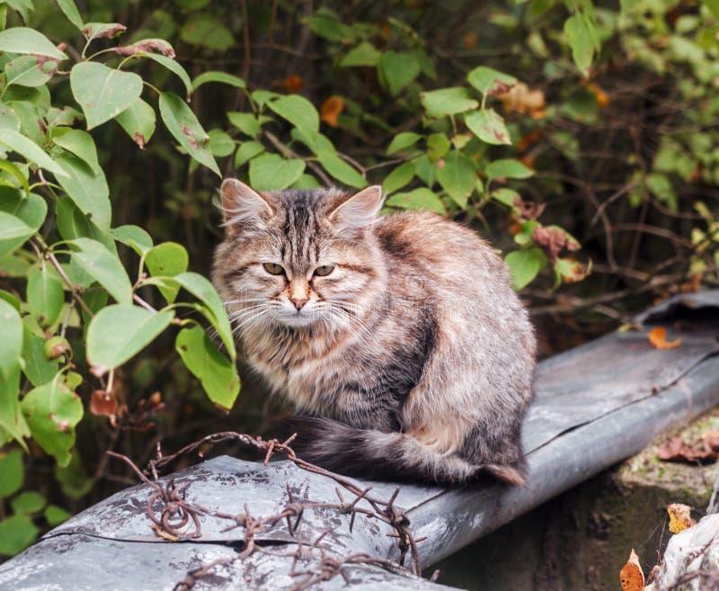 Bezdomny pstrobarwny kot przy dniem obraz stock