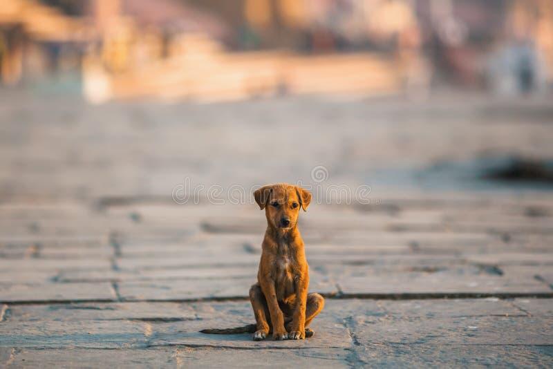 Bezdomny szczeniaka pies siedzi samotnie po środku ulicy tylko zdjęcia stock