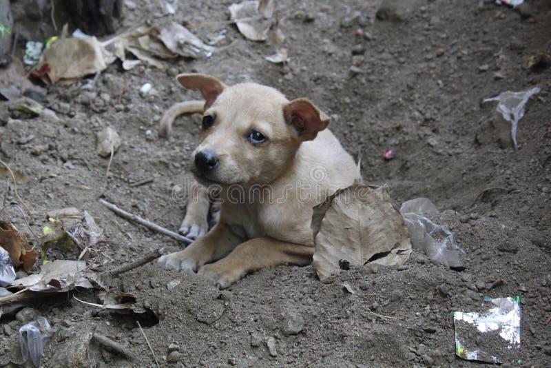 Bezdomny uliczny bieda psa patrzeć fotografia royalty free