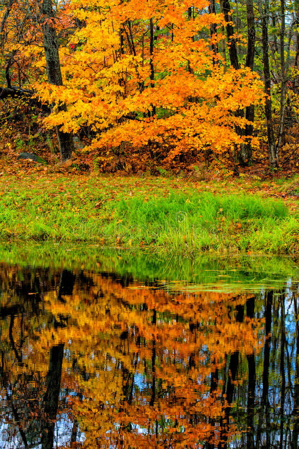 Bezinning van de herfstbomen op water stock foto's