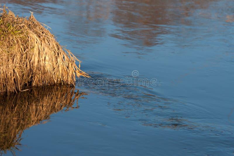 Bezinning van een blauwe hemel in een kreek met ontdooid water in het bos van de lenteapril bij zonsondergang stock fotografie