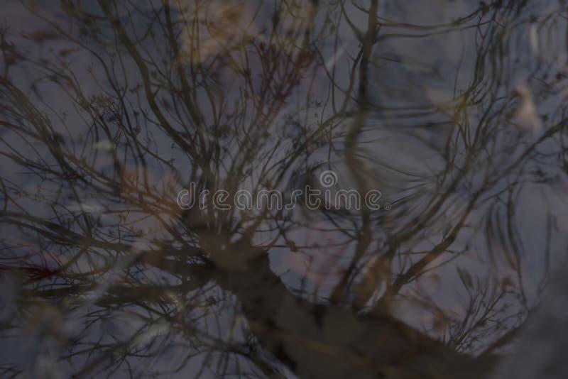 Bezinning van een grote boom stock foto
