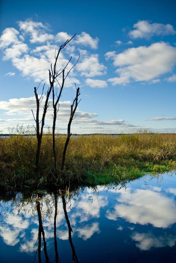 Bezinning van hemel in moeras stock afbeelding