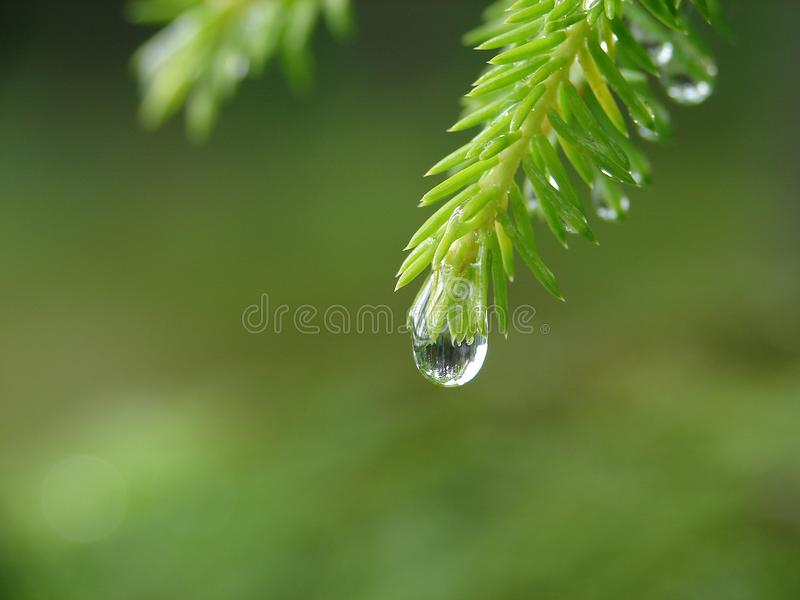 Bezinning van het bos in de regendruppel stock fotografie