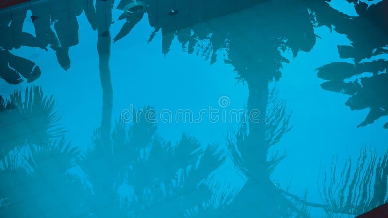 Bezinning van palmen in het blauwe poolwater stock afbeelding