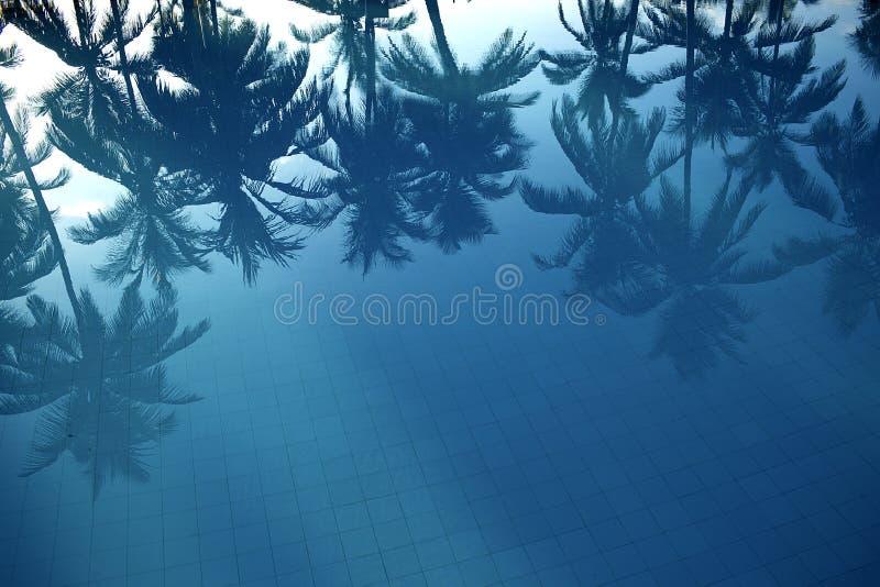 Bezinning van palmen in het water royalty-vrije stock foto