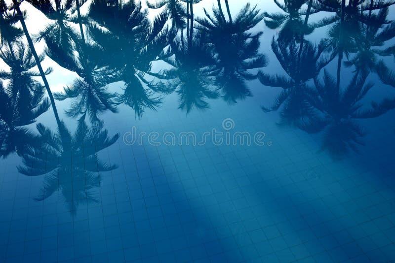 Bezinning van palmen in het water royalty-vrije stock afbeelding